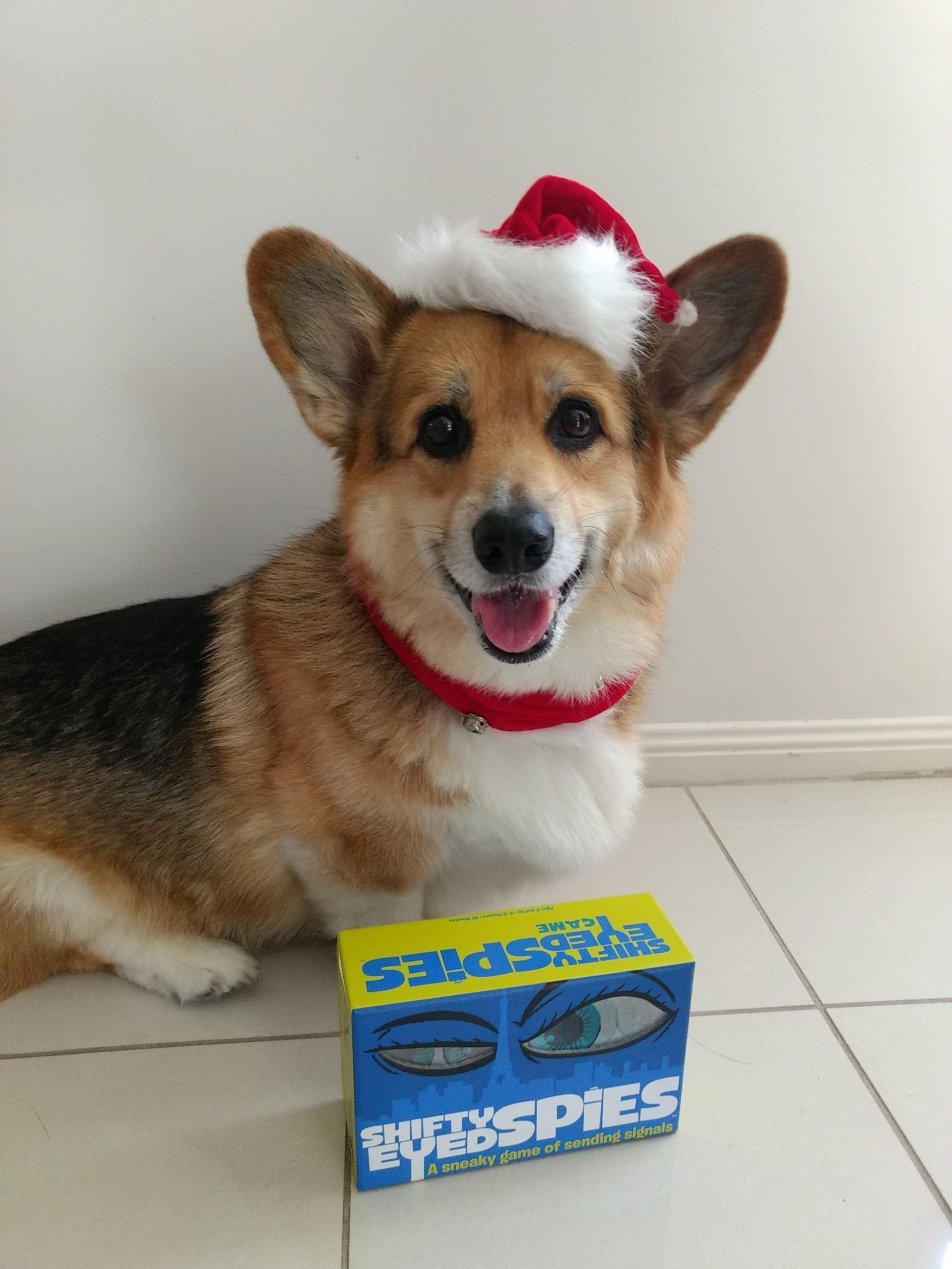 Corgi in christmas outfit sitting behind a copy of Shifty Eyed Spies