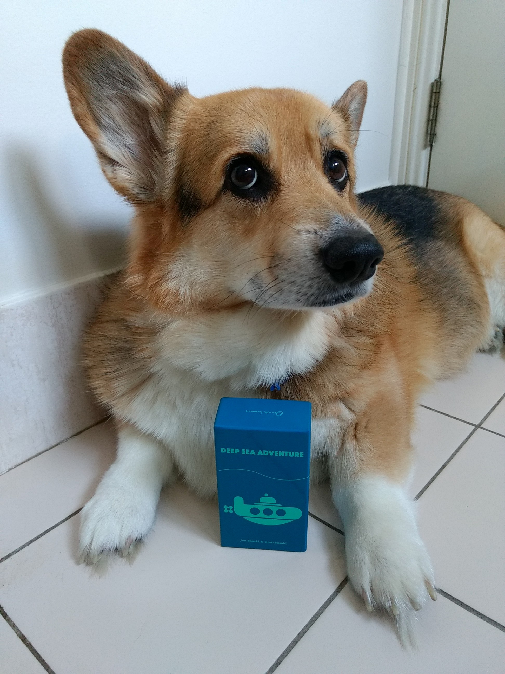 r2r-board-game-review-deep-sea-adventure-corgi