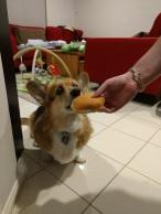 Birthday Cheeseburger