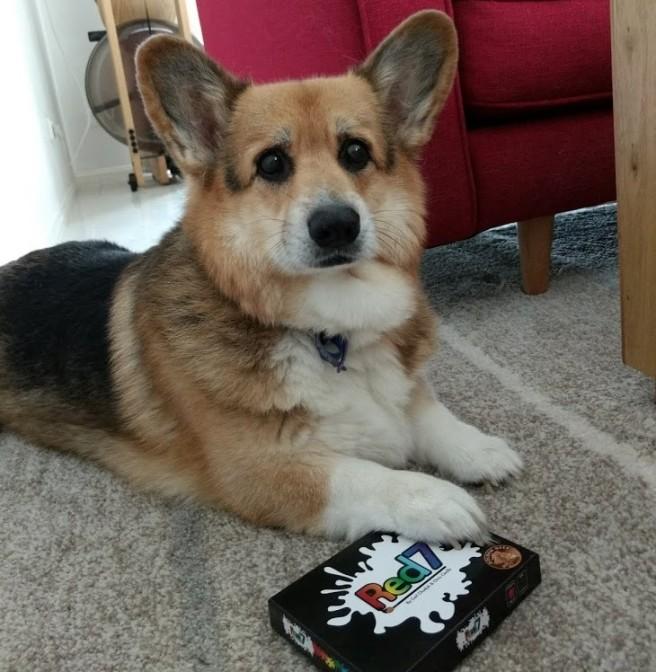 Red-7-Board-Game-Review-Corgi