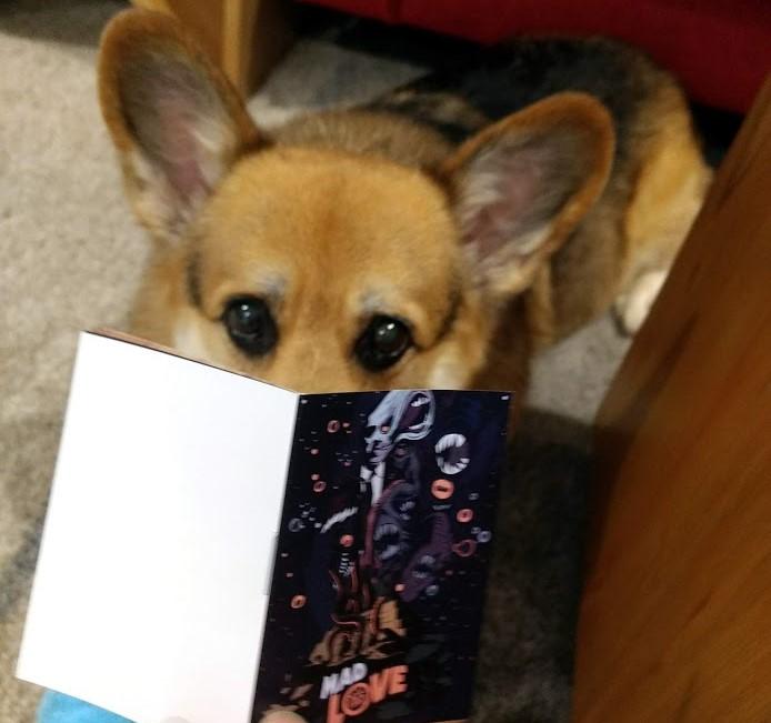 Corgi reading the manual for Mad Love