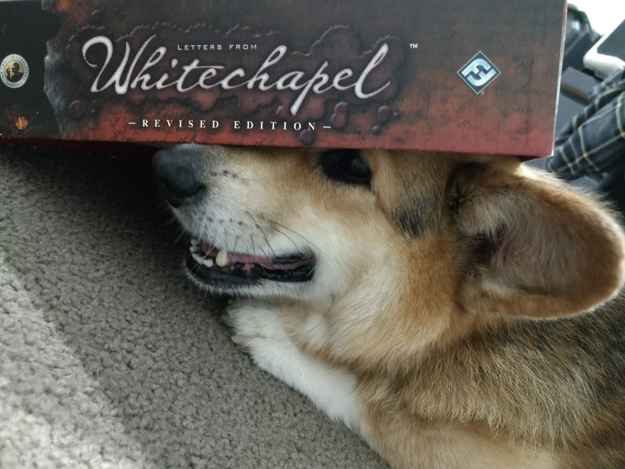 Smiling Corgi with the Letters From Whitechapel box on his head.