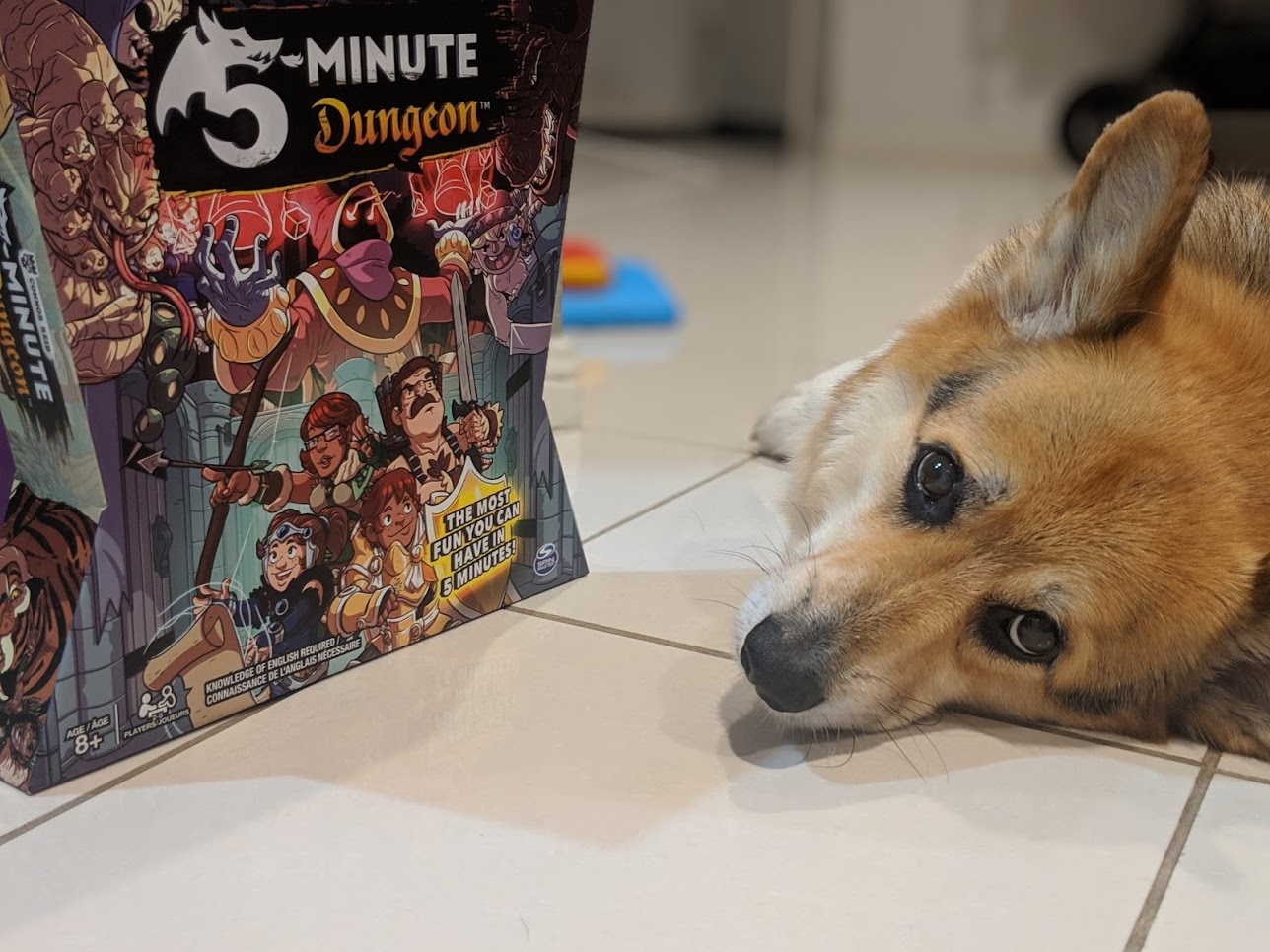 Incredibly cute corgi next to a board game box (5 minute dungeon