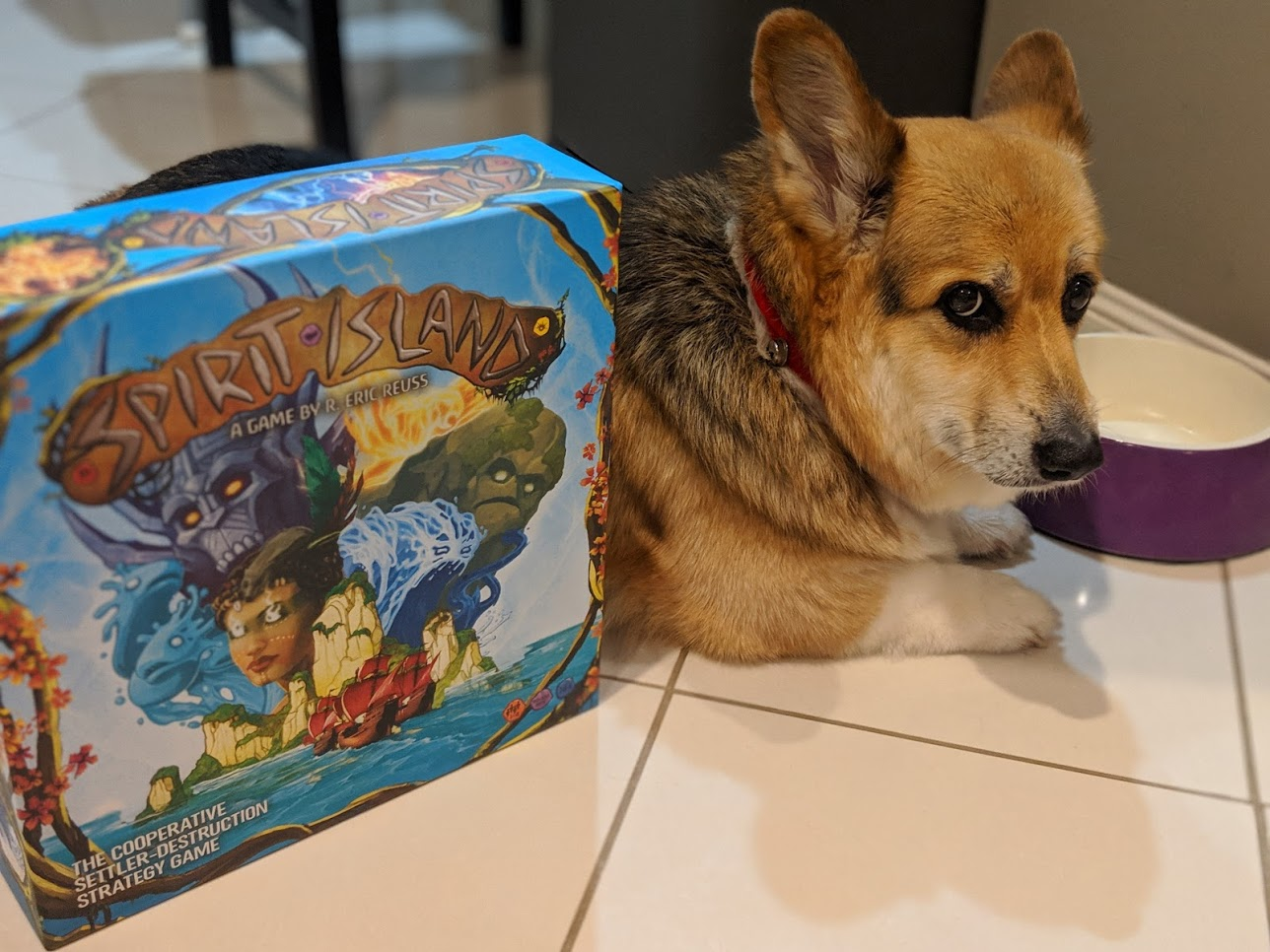 Corgi looking unimpressed by the cover of Spirit Island.
