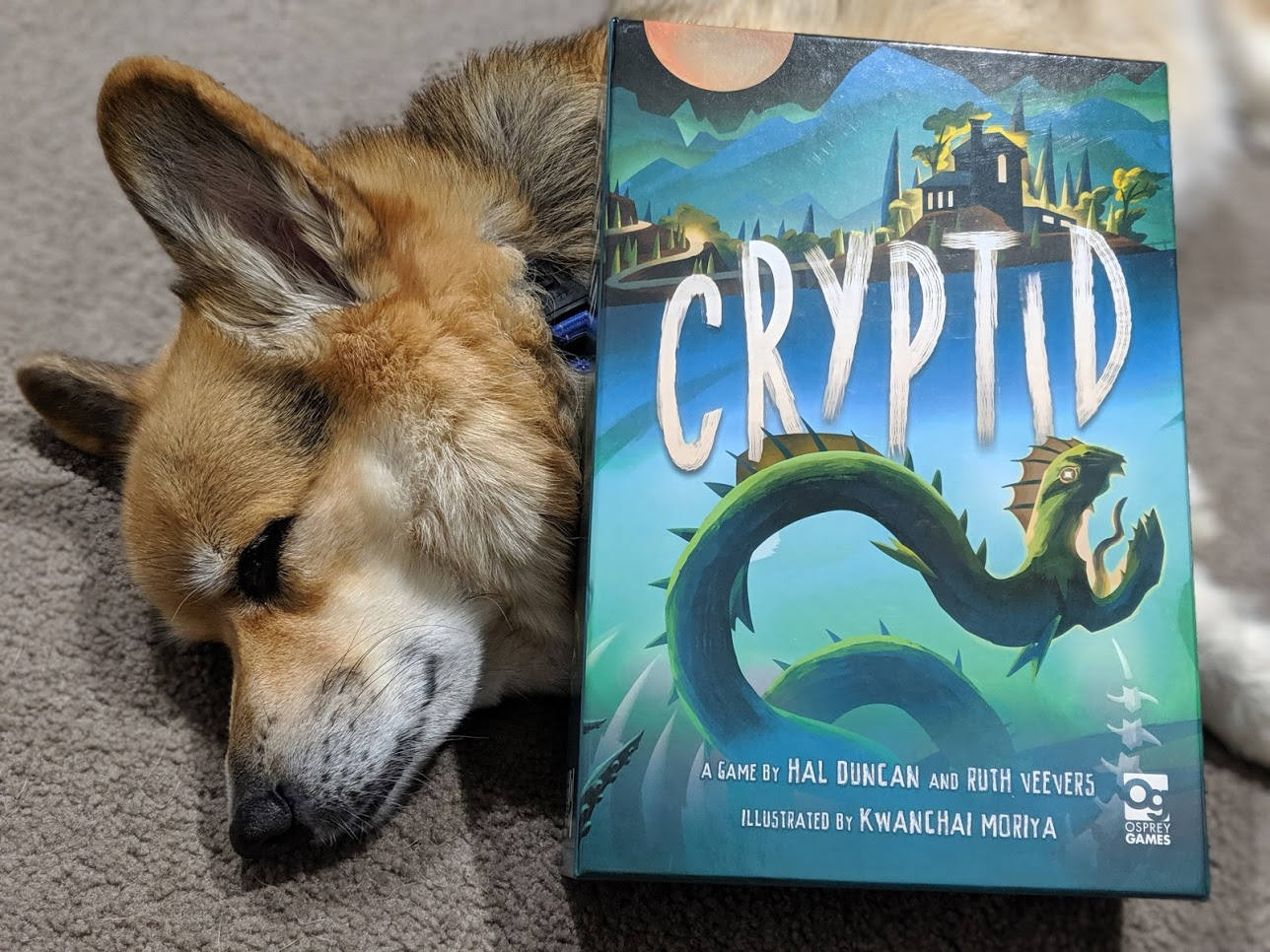 Corgi sleeping under the Cryptid box. he cute.