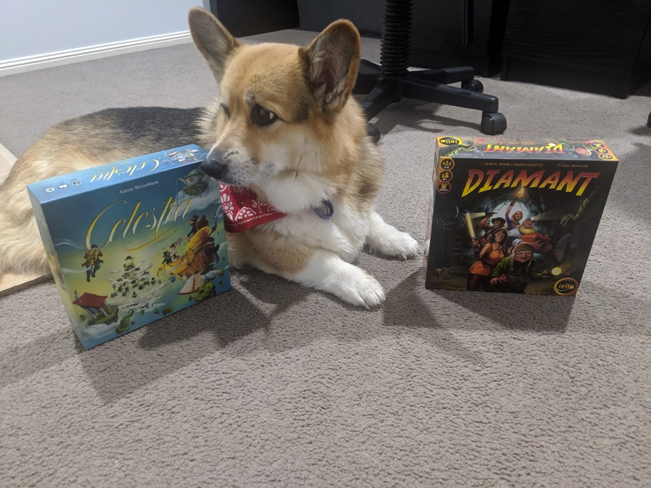 Chester the corgi selects Celestia as winner between the two.