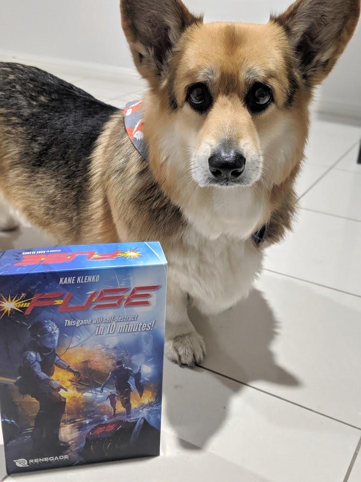 Handsome Corgi stands next to the Fuse box.