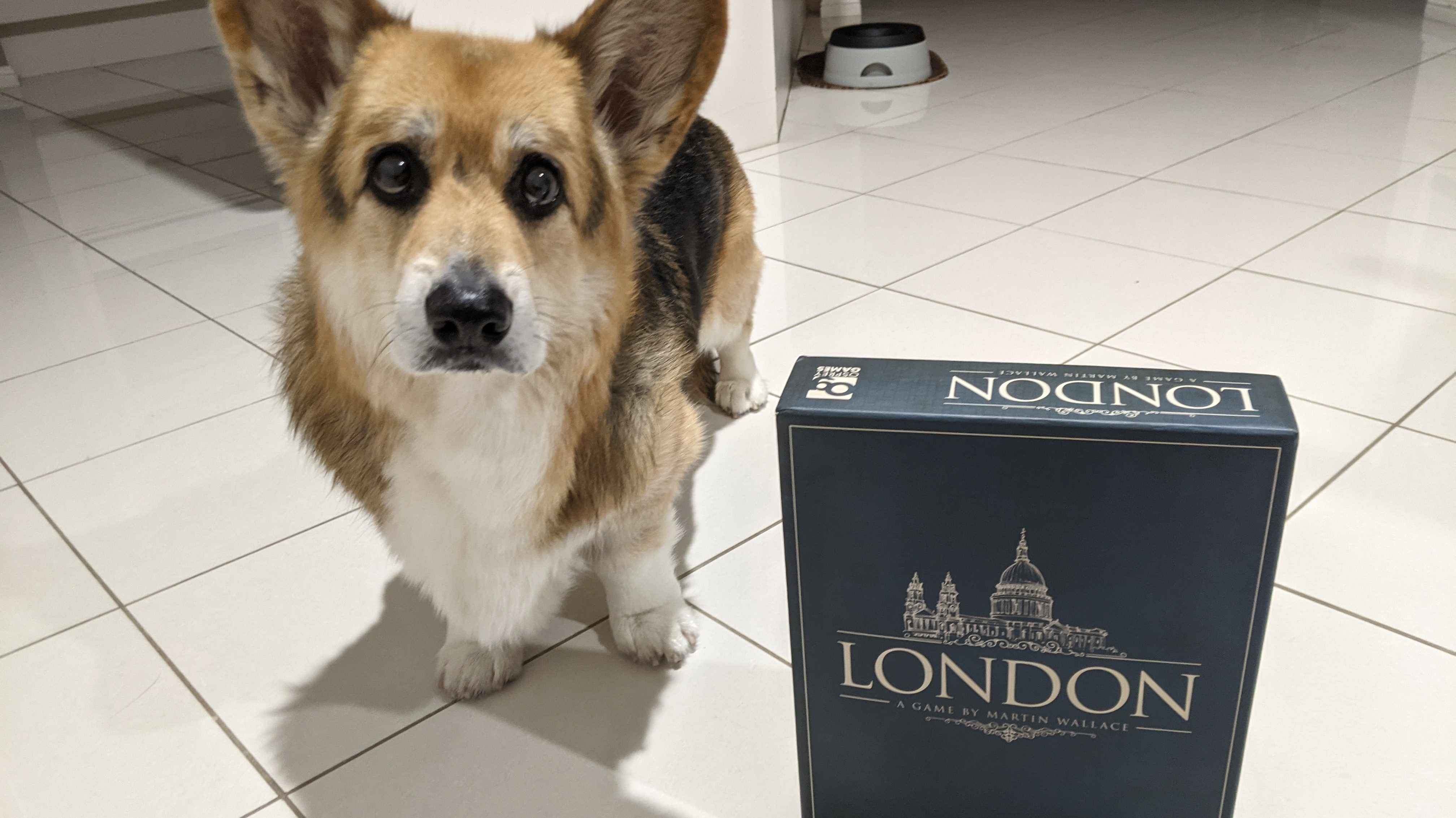 Chester the corgi standing beside a copy of the board game London.